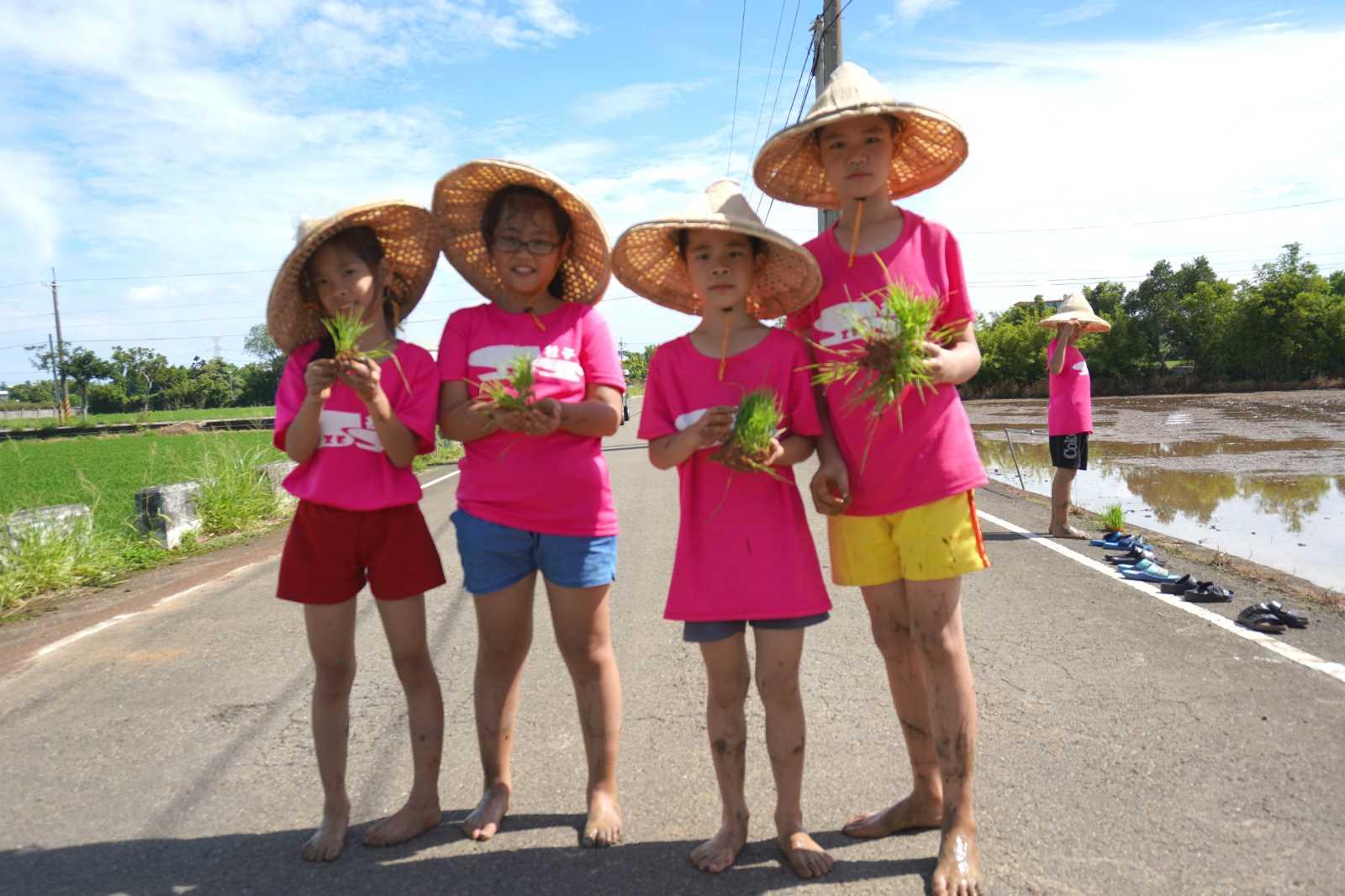 社子國小以「稻米文化」作為課程主題,讓學生更了解家鄉特色。